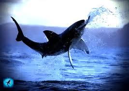 Полезные свойства акульего хряща